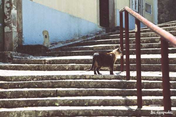 chat-sintra-portugal
